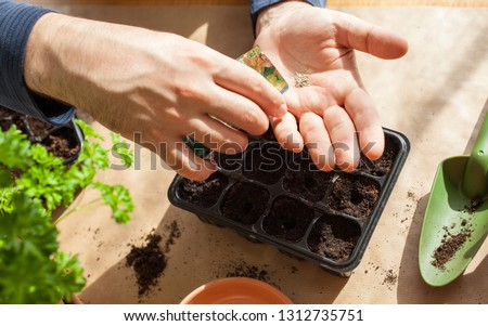 gardening, planting at home. man sowing seeds in germination box #1312735751