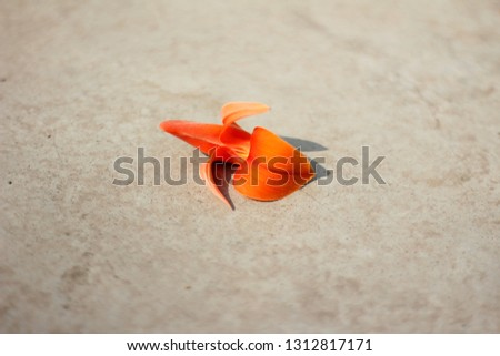 Butea Monosperma Flower #1312817171