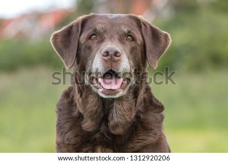 Old dog portrait #1312920206