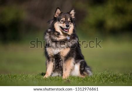 portrait of a dog #1312976861