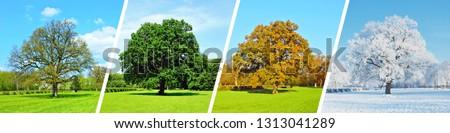 Park Tree Panorama - Four Seasons Royalty-Free Stock Photo #1313041289