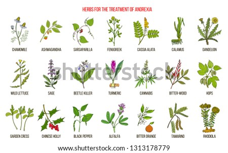 Best herbs for the treatment of anorexia. Hand drawn botanical vector illustration #1313178779