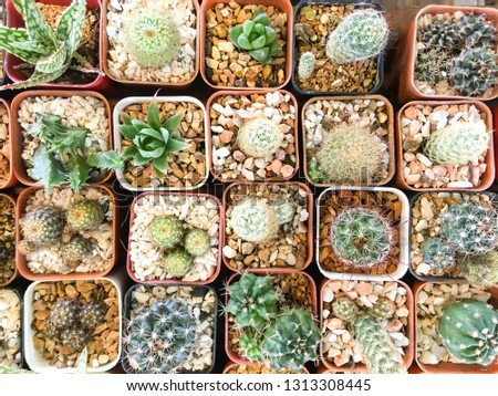 Top view of cactus tree background for create your text, Beautiful green cactus tree on small pot for nature background, small tree pot row on ground, colorful cactus, small leaves tree #1313308445