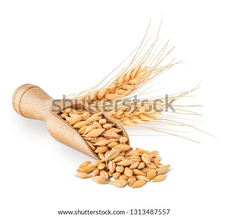 Barley seeds and ears isolated on white background #1313487557