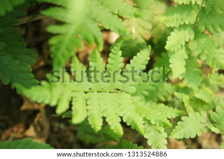 Green rare fern in selective focus #1313524886