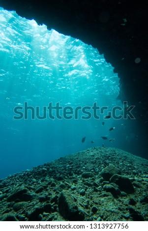 Various aquatic creatures #1313927756