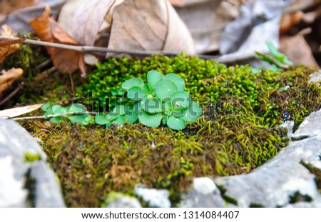 Green forest plants among lichens and moss, Tennessee, USA #1314084407