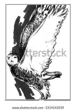 Polar owl Postcard, print. Barn owl Figure markers. Bright, colorful drawing.