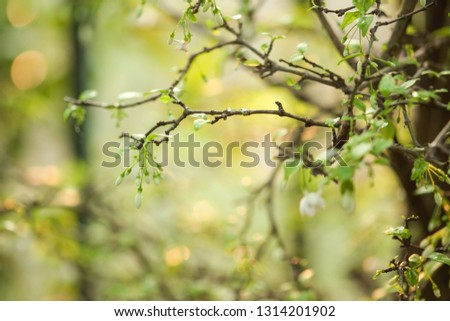 Beautiful leaves and flowers #1314201902