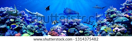 Panorama background of beautiful coral reef with marine tropical fish. Whale shark, Hammerhead shark, Zebra shark and sea turtle visited here #1314375482