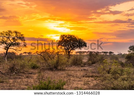 Beautiful Kruger savannah at sunset