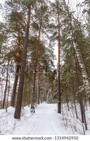 Winter landscape. Ilmen reserve, Chebarkul lake, Chelyabinsk region, southern Urals, Russia. #1314942950