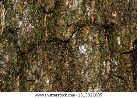 Tree bark texture #1315021085