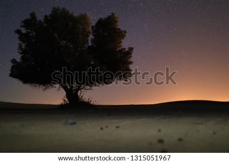 Tree and stars lighting stars #1315051967