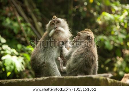 Monkey forest. Ubud. Bali. Indonesia #1315151852