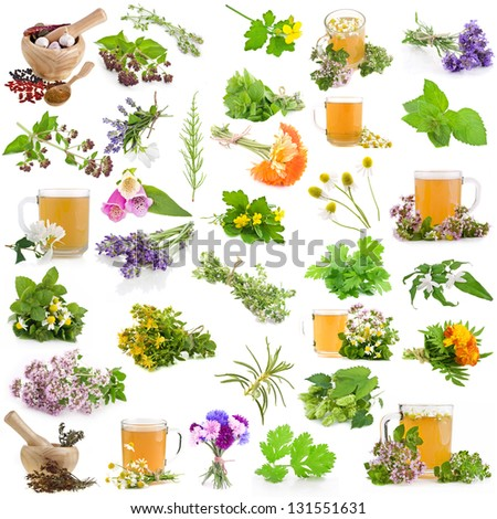 Set of fresh blooming medicative herbs, leaves, plants, isolated on a white background #131551631