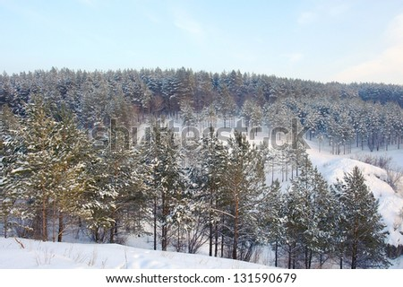 Winter landscape in forest with pines on the mountains, evening #131590679