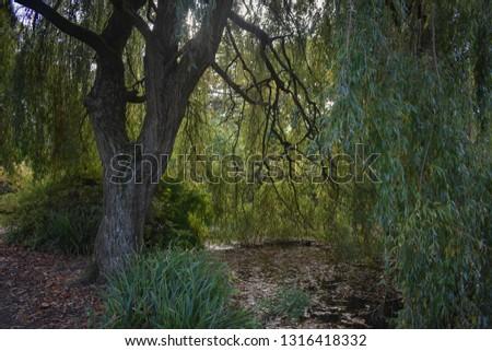 A dark forest.  #1316418332
