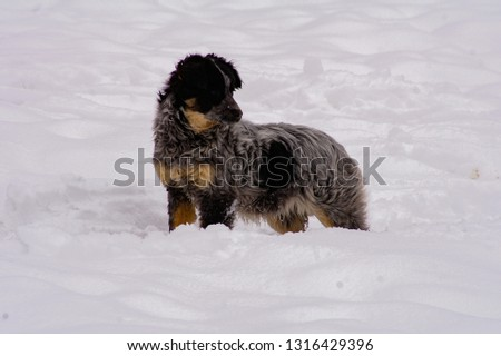 brave dog friend outdoors in the winter season #1316429396