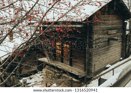 Dying Plant Winter Cabin #1316520941