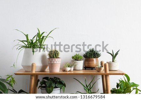 Scandinavian room interior with plants, cacti and succulents composition in design and hipster pots on the brown shelf. White walls. Modern and floral concept of home garden. Nature love. #1316679584