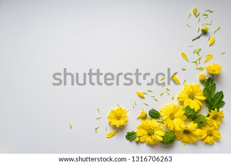 Beautiful bouquet of yellow autumnal chrysanthemums close up against white background with empty/ clear space/ place for text postcard concept. #1316706263
