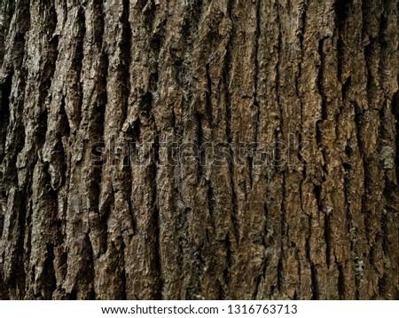 Rustic tree bark texture #1316763713