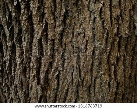 Rustic tree bark texture #1316763719