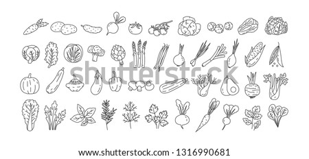 Bundle of vegetables, cultivated root crops, salads, spicy herbs drawn with contour lines on white background. Set of natural design elements. Monochrome vector illustration in line art style #1316990681