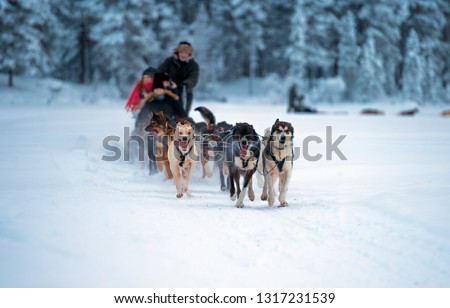 sledding with husky dogs in lNorway .Tromso