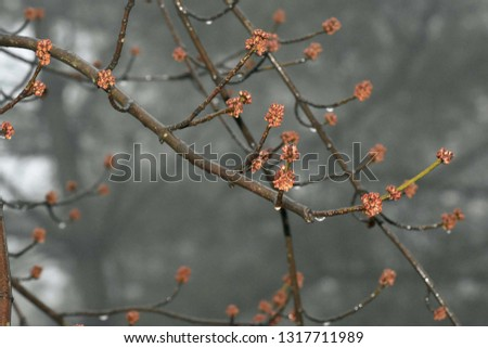 Tree Buds on a rainy day #1317711989