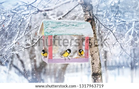 birds on feeder. titmouses sitting on bird feeder. birds parus major eating seed from bird feeder, winter time. human care of birds, problem of survival of birds in city, environment. #1317963719
