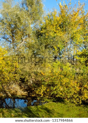 Beautiful woods backdrop. Colorful tree near river #1317984866