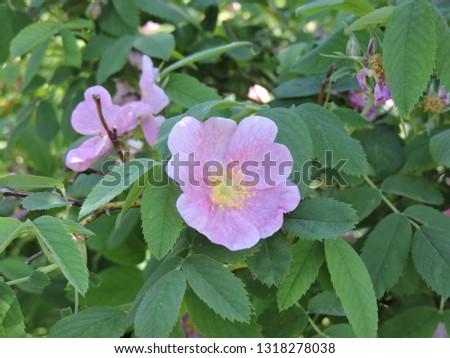 Fresh pink flowers in spring #1318278038