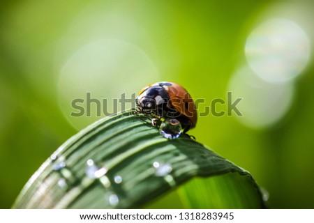 Ladybug journey on leaf. #1318283945