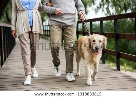 partial view of senior couple walking with golden retriever dog across wooden bridge in park #1318833815