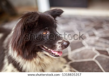 the black furry dog is relaxing in front of the house after playing. #1318835357