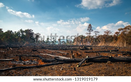 Wood cutting, burning wood, destroying the environment.Area of illegal deforestation of vegetation native to the Laos forest,ASIA. #1319019179