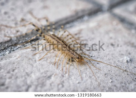 A macro shot of a centipede on a concrete floor Royalty-Free Stock Photo #1319180663