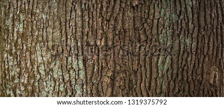 Embossed texture of the brown bark of a tree with green moss and lichen on it. Expanded circular panorama of the bark of an oak. #1319375792