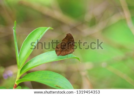 Brown butterfly on the garden #1319454353