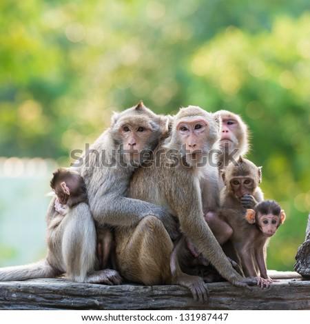 monkey family #131987447
