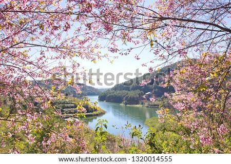 Blooming Prunus cerasoides in spring season - Foreground flower branchs on lake scene background #1320014555
