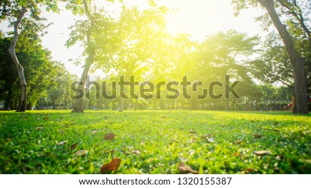 Park with bright grass and trees, sun glare. Relaxing fitness background. Spring-summer wallpaper. Low angle shooting. #1320155387