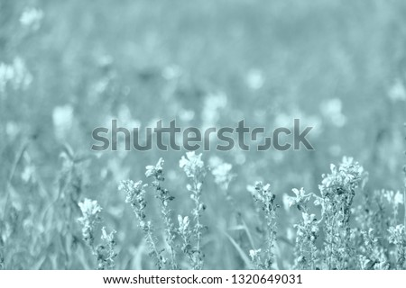 Floral summer spring background. Colorful artistic image, free copy space. Closeup of spring flowers on the ground. #1320649031