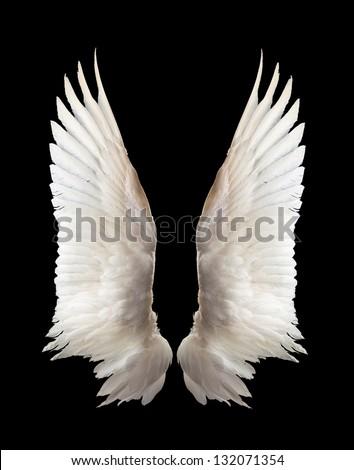 Internal white wing plumage. Isolation. Royalty-Free Stock Photo #132071354