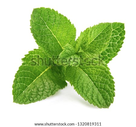 Fresh leaf mint green herbs ingredient for mojito drink, isolated on white background. #1320819311