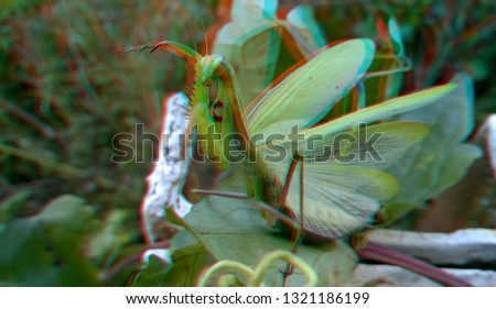 mantis, insect. 3D, anaglyph #1321186199
