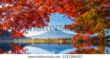Colorful Autumn Season and Mountain Fuji with morning fog and red leaves at lake Kawaguchiko is one of the best places in Japan #1321286423