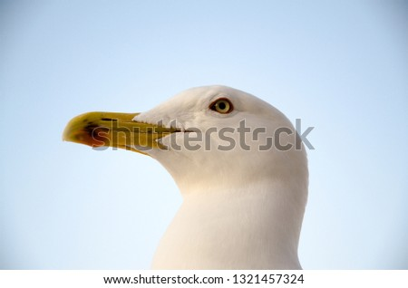 White seagull looking #1321457324